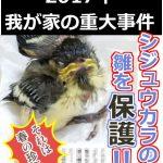 【野鳥保護】①小鳥(シジュウカラ)のヒナを保護することになったら