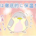 【野鳥保護】小鳥(シジュウカラ)の雛に最も重要なのは保温です!!