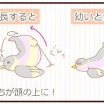 【野鳥保護】小鳥(しじゅうから)の雛の餌やり・フンについて